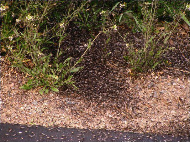 Chmara komarów 15