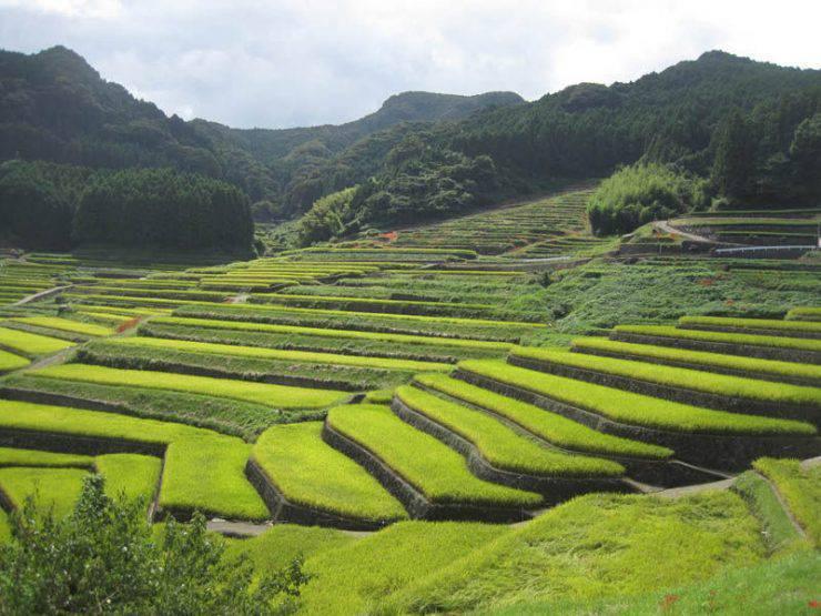 Tarasy ryżowe 20