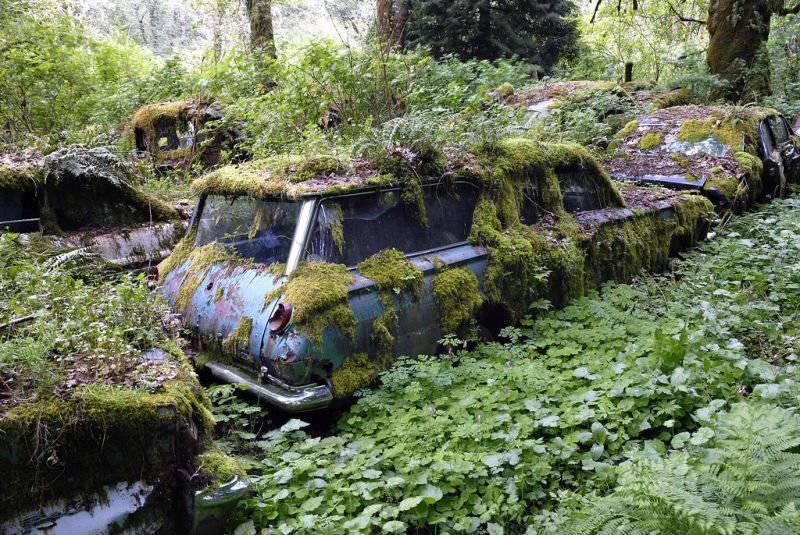 Złomowisko w lesie 19