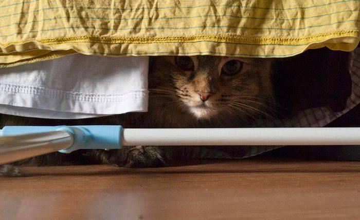 Przyczajone koty 4