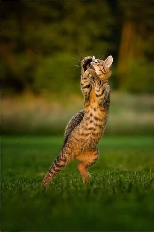 Śmieszne zdjęcia zwierząt #6 18