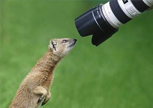 Fotografowie, czyli po drugiej stronie obiektywu 115