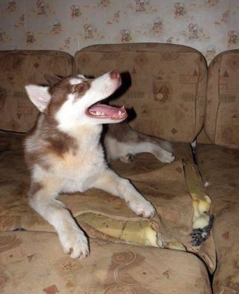Husky - czworonożne rozrabiaki 28