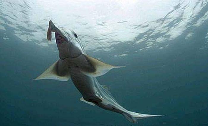 Przerażające rekiny 13