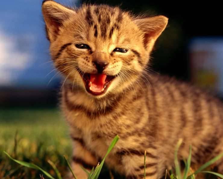 Małe kotki 29