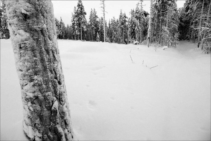 Zimowe krajobrazy 38