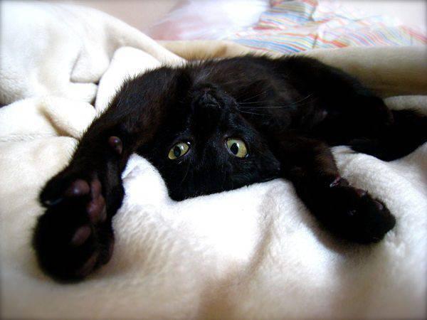 Koty, kociaki i kocury 38
