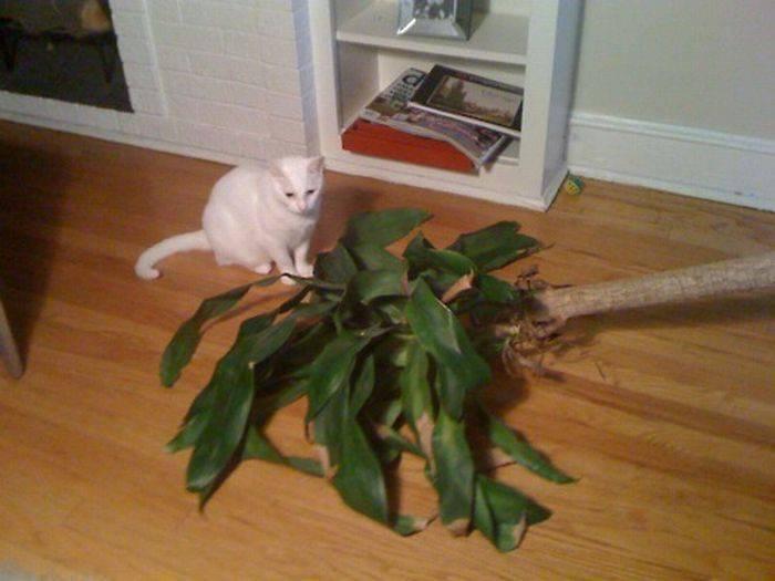Nieznośne koty 15