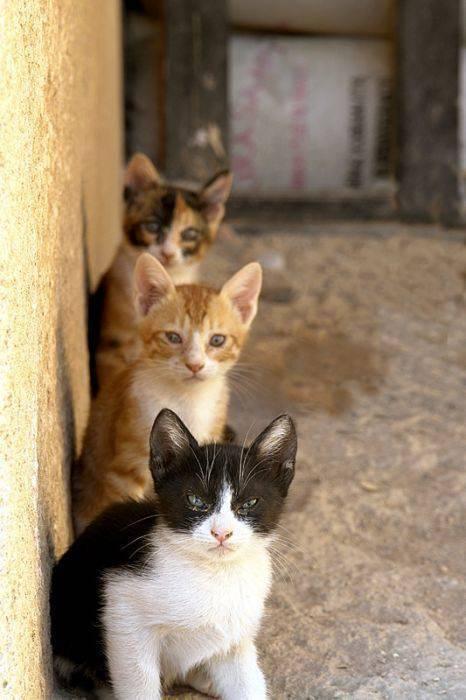 Słodkie kociaki 46