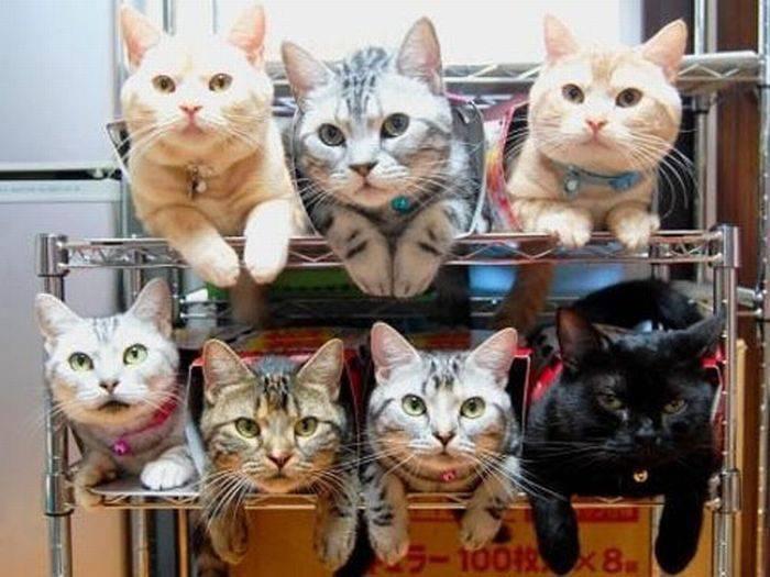 Jak przechowywać koty? 11