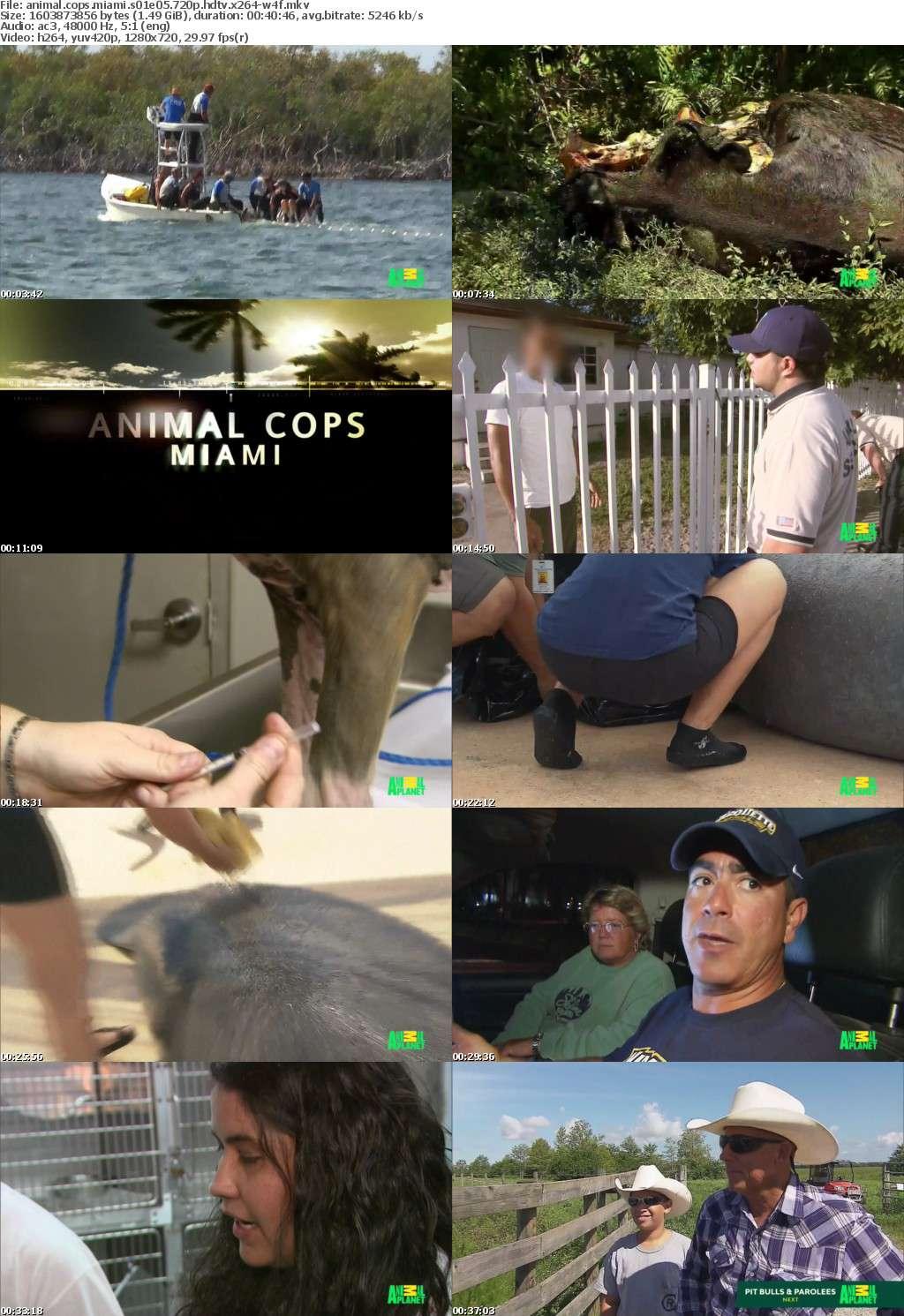 Animal Cops Miami S01E05 720p HDTV x264-W4F
