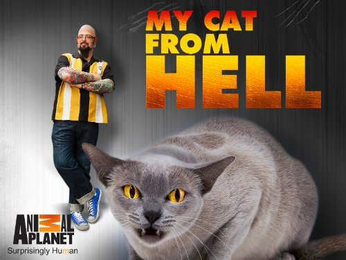 My Cat From Hell S10E09 Guilt Stricken Guardian 720p WEB x264-CAFFEiNE