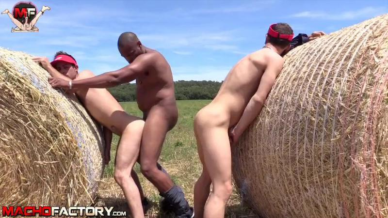 Country Pigs (Macho Factory)