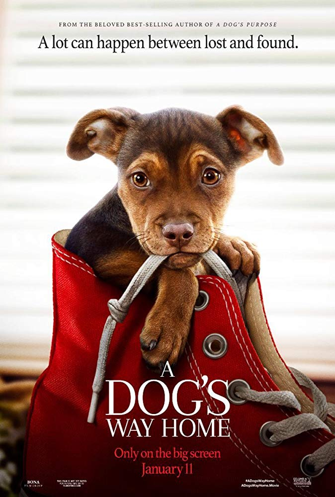 A Dogs Way Home 2019 Movies HD Cam x264 Clean Audio New Source with Sample