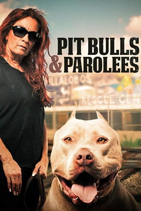 Pit Bulls and Parolees S13E07 Like a Boss 480p x264-mSD