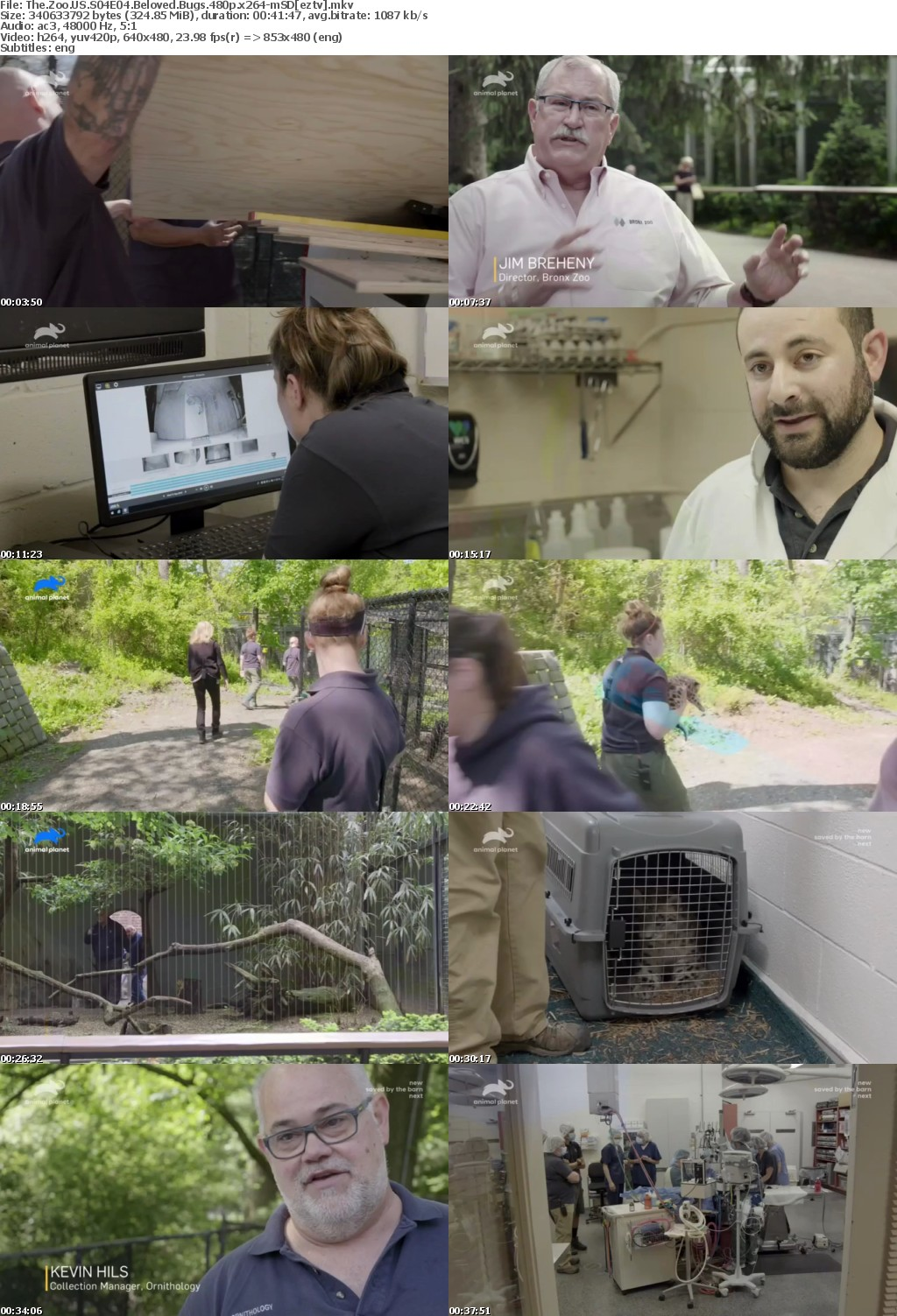 The Zoo US S04E04 Beloved Bugs 480p x264-mSD