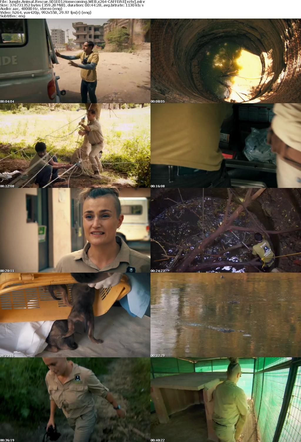 Jungle Animal Rescue S01E01 Homecoming WEB x264-CAFFEiNE