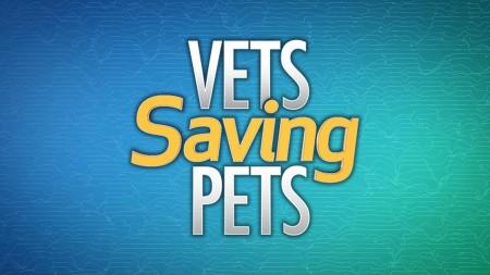 Vets Saving Pets S02E15 Nine Lives And Counting WEB x264-LiGATE