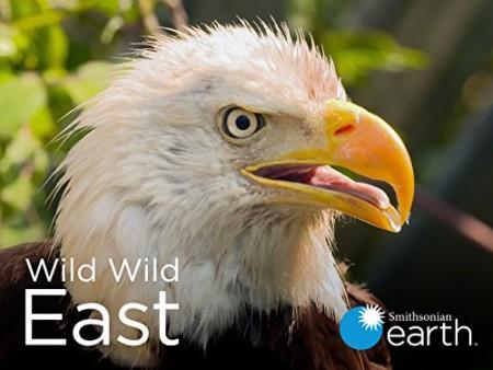 Wild Wild East S01E03 Sky 720p WEB h264-CAFFEiNE